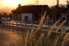 Fleur d'herbe Photographie stock
