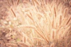 Fleur d'herbe Photo stock