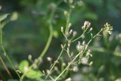 Fleur 4 d'herbe Photos libres de droits