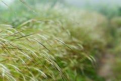Fleur d'herbe avec la lumière du soleil Image libre de droits