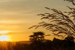 Fleur d'herbe avec le fond dans le coucher du soleil photographie stock