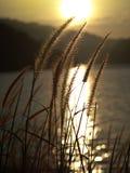 Fleur d'herbe belle Photographie stock libre de droits
