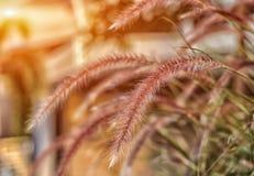 Fleur d'herbe dans le jardin Images libres de droits