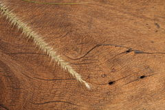 Fleur d'herbe sur le bois dur Image libre de droits