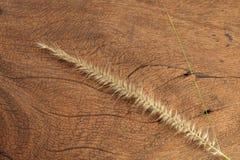 Fleur d'herbe sur le bois dur Photos stock