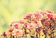 fleur d'hiver Photo stock