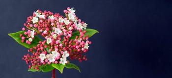 Fleur d'hiver Image libre de droits