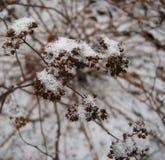 fleur d'hiver Photographie stock