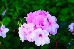 Fleur d'hiver Photographie stock libre de droits