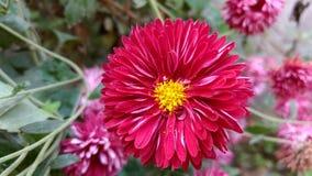 fleur d'hiver Photos libres de droits