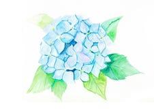 Fleur d'hortensia de bleus Images stock