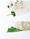 Fleur d'hortensia sur un fond blanc avec un espace pour le texte Photographie stock libre de droits