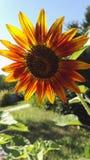 Fleur d'incendie photo stock