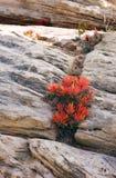 Fleur d'incendie dans Crevace Images libres de droits