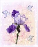 fleur d'iris Image stock