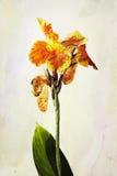 Fleur d'iris d'aquarelle Photographie stock libre de droits