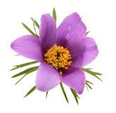 Fleur d'isolement Images libres de droits