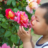 Fleur d'odeur de garçon Image stock