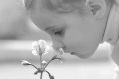 Fleur d'odeur de petite fille Photos stock