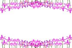 Fleur d'oignon illustration libre de droits