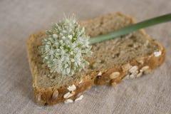 Fleur d'oignon sur la part du pain d'oignon Photographie stock