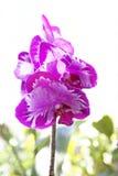 Fleur d'orchidée Photographie stock