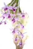 Fleur d'orchidée Photo stock