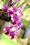 Fleur d'orchidée. Photos libres de droits