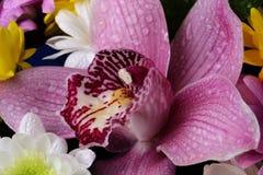 Fleur d'orchidée avec des baisses de rosée en gros plan Image stock