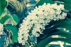 Fleur d'orchidée dans le jardin à l'hiver ou à la journée de printemps Photos libres de droits