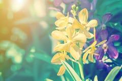 Fleur d'orchidée dans le jardin à l'hiver ou à la journée de printemps pour la conception Images libres de droits
