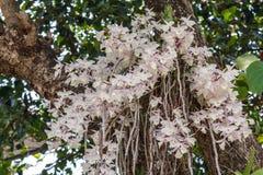 Fleur d'orchidée dans le jardin à l'hiver ou à la journée de printemps Photo stock