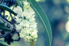 Fleur d'orchidée dans le jardin à l'hiver ou à la journée de printemps pour la conception Photos stock