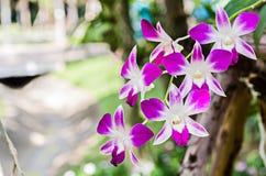 Fleur d'orchidée dans le jardin Photos libres de droits