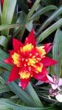 Fleur d'orchidée dans le jardin photo libre de droits