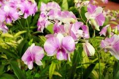 Fleur d'orchidée dans le jardin tropical Photos libres de droits