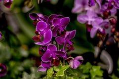 Fleur d'orchidée dans le jardin tropical photographie stock