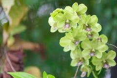 Fleur d'orchidée de Beautifum dans le jardin Photo libre de droits