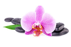 Fleur d'orchidée de concept de station thermale avec Zen Stones Image stock
