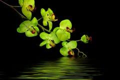 Fleur d'orchidée de créateur photographie stock