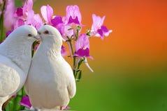 Fleur d'orchidée de guindineau Photographie stock libre de droits