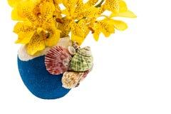 Fleur d'orchidée de jaune de Mokkara d'isolement sur le blanc Images libres de droits