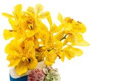 Fleur d'orchidée de jaune de Mokkara d'isolement sur le blanc Photo libre de droits