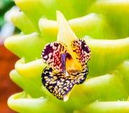Fleur d'orchidée en Thaïlande Photo stock