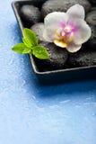 Fleur d'orchidée, feuilles de vert et pierres de station thermale sur le backgroun bleu humide Image libre de droits