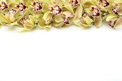 Fleur d'orchidée d'isolement sur le fond blanc sur le dessus avec l'espace de copie photos stock