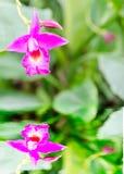 Fleur d'orchidée reflétée dans l'eau Images stock