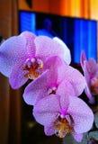 Fleur d'orchidée Regard artistique dans des couleurs vives de vintage Image libre de droits