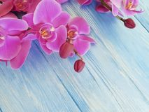 Fleur d'orchidée sur la décoration en bois colorée de cadre de fragilité photos stock