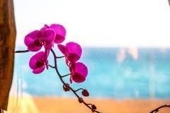 Fleur d'orchidée sur la fenêtre Photographie stock